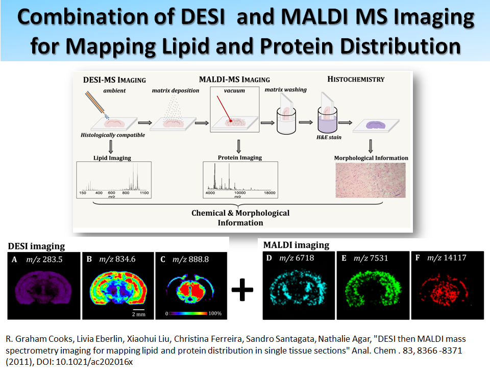 Combination of DESI and MALDI MS Imaging for Mapping Lipid and Protein Distribution