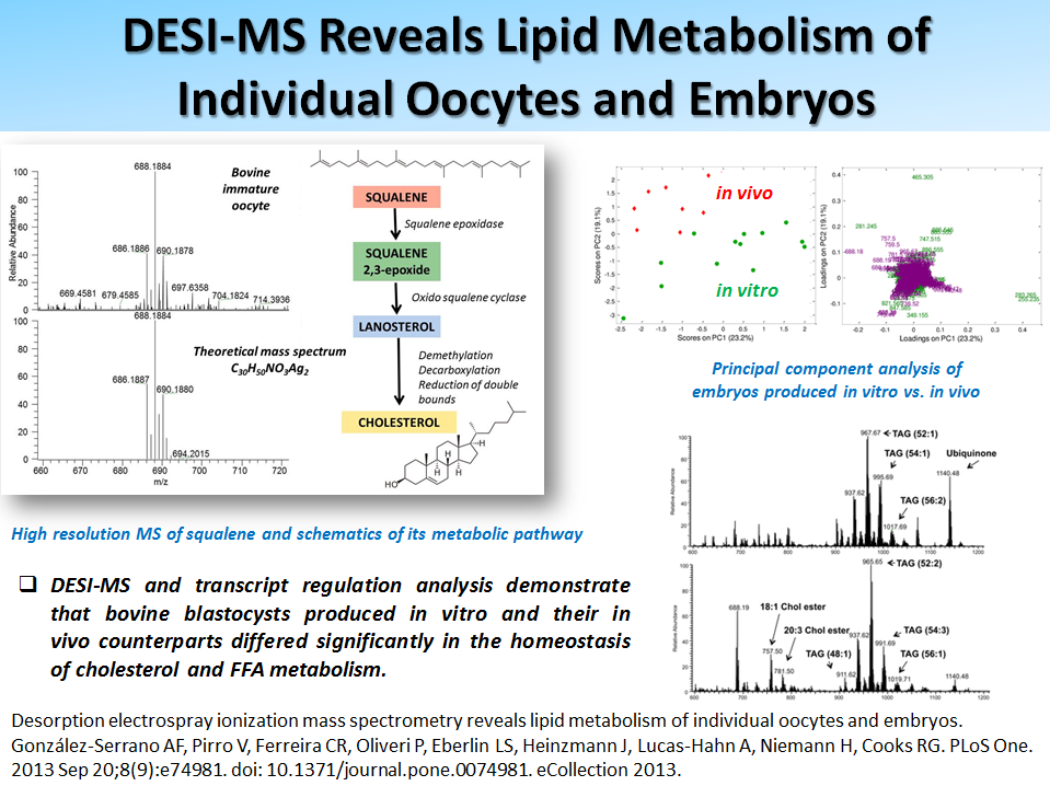 DESI-MS Reveals Lipid Metabolism of Individual Oocytes and Embryos