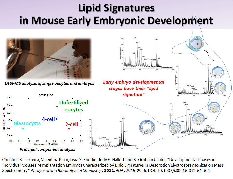 Lipid Signatures in Mouse Early Embryonic Development